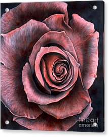 Red Rose Acrylic Print by Lawrence Supino