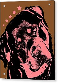 Rottweiler  Acrylic Print by Dean Russo