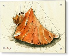 Seashell Art Painting Acrylic Print by Juan  Bosco