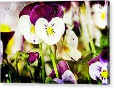 Viola Acrylic Print by Martina Fagan