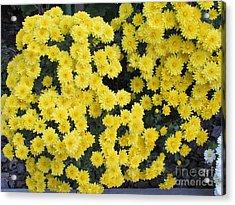 Yellow Flower Acrylic Print by Joyce Woodhouse