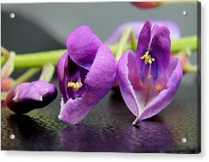 2010 Wisteria Blossom Up Close 1 Acrylic Print by Robert Morin