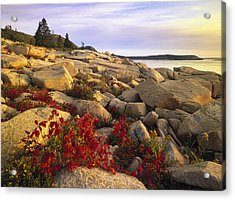 Atlantic Coast Near Thunder Hole Acadia Acrylic Print by Tim Fitzharris