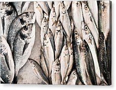 Fresh Fish Acrylic Print by Tom Gowanlock