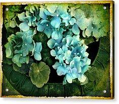 Hydrangea Acrylic Print by Jessica Jenney