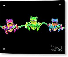 3 Little Frogs Acrylic Print by Nick Gustafson