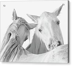 Pals Acrylic Print by Ron  McGinnis
