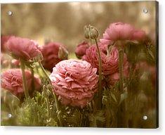 Ranunculus Acrylic Print by Jessica Jenney