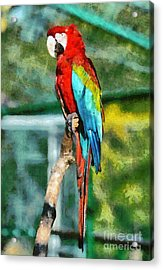 Red And Green Macaw Acrylic Print by George Atsametakis