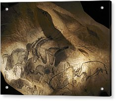 Stone-age Cave Paintings, Chauvet, France Acrylic Print by Javier Truebamsf