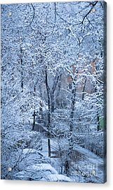 Winter Acrylic Print by Gabriela Insuratelu
