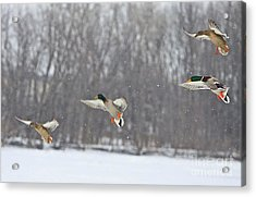 4 In A Row Acrylic Print by Robert Pearson