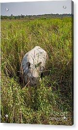 Indian Rhinoceros, India Acrylic Print by B. G. Thomson