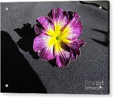 Pink Flower. Acrylic Print by Joyce Woodhouse