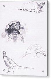 Pheasants Acrylic Print by Archibald Thorburn