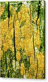 Tree Bark Acrylic Print by John Foxx