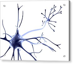 Nerve Cell Acrylic Print by Pasieka