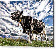 Cow Acrylic Print by Marvin Blaine