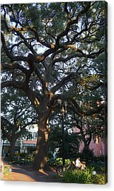 Savannah Mighty Oak Acrylic Print by Laurie Perry