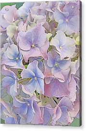 Flower Carpet. Acrylic Print by Andy Za