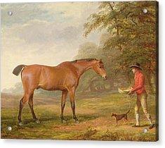 A Bay Horse Acrylic Print by George Garrard