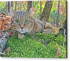 A Bed Of Moss Acrylic Print by Susan Leggett