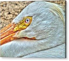 A Bird's Eye View Acrylic Print by Michael Garyet
