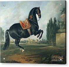 A Black Horse Performing The Courbette Acrylic Print by Johann Georg Hamilton