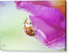 A Breath Of Spring Acrylic Print by Angela Doelling AD DESIGN Photo and PhotoArt