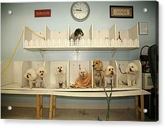 A Day At The Doggie Day Spa Acrylic Print by Michael Ledray
