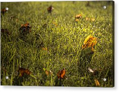 A Difference Of Opinion Acrylic Print by Chris Fletcher