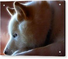 A Dogs Life Acrylic Print by Stuart Turnbull