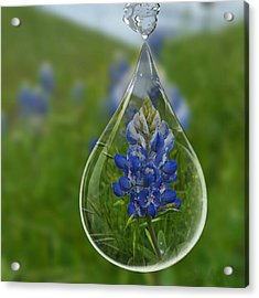 A Drop Of Texas Blue Acrylic Print by ARTography by Pamela Smale Williams