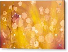 A Fairies Place IIi - Chess Flower Acrylic Print by Roeselien Raimond