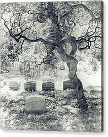 A Family Tree  Acrylic Print by Jessica Jenney