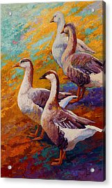 A Gaggle Of Four - Geese Acrylic Print by Marion Rose