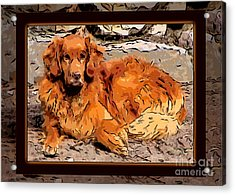 A Golden Retriever Resting Abstract Dog Art Acrylic Print by Omaste Witkowski