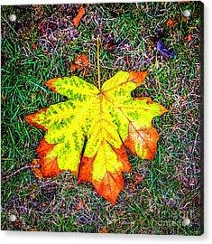 A New Leaf Acrylic Print by Jon Burch Photography