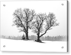A Perfect Pair Acrylic Print by Shared Perspectives  Photography
