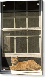 A Pet Cat Resting In A Screened Window Acrylic Print by Charles Kogod