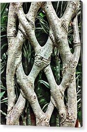 A Plant Trunk Acrylic Print by Tom Gowanlock