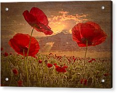A Poppy Kind Of Morning Acrylic Print by Debra and Dave Vanderlaan