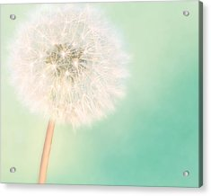 A Single Wish II Acrylic Print by Amy Tyler
