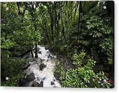 A Small River Flows Through A Dense Acrylic Print by Hannele Lahti