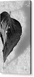 A Tattered Heart Acrylic Print by Julie Lueders