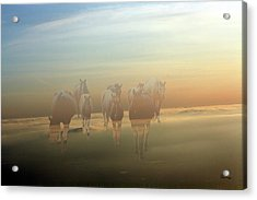A Touch Of Horse Heaven Acrylic Print by Andrea Lawrence