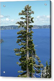 A Tree With A View Acrylic Print by Methune Hively