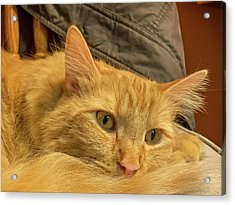 A Very Content Cat Acrylic Print by Guy Whiteley