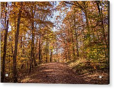 A Walk In The Woods Acrylic Print by Andrea Kappler