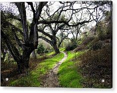 A Walk In The Woods Acrylic Print by Joe Darin
